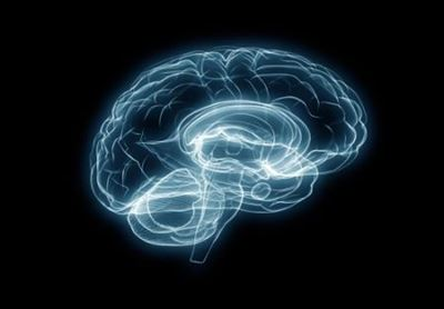 Bigger brains don't mean Higher IQ