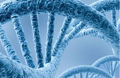 Genetic factors play a role in determining IQ